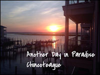 anohter day in paradise banner