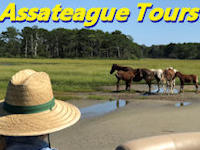 assateague tours banner
