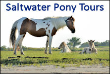 saltwater pony tours banner ad